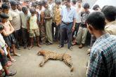 Shocking: Uttarakhand villagers are killing leopards for Rs 2,000