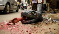 Bengaluru: commuters panic after anaconda emerges out of a pothole