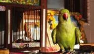 अगर घर में लगाने जा रहे हैं तोते की तस्वीर, तो पहले जान लें ये खास बात,  वरना बाद में पड़ेगा पछताना