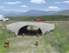 Now underpasses and ladders on Mumbai-Goa highway for animals