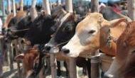 गो तस्करी रोकने के लिए मोदी सरकार गायों का भी बनाएगी आधार कार्ड