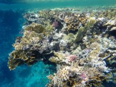 Scientists discover earliest 'Jurassic corals'