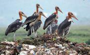 Bhagalpur constituency: Bihar elections, richest MLA and animal sanctuaries