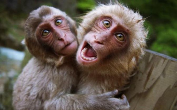 Monkey Baat People From This Bihar Constituency Are Afraid To Go Out And Vote Heres Why