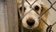 World Animal Protection asks dairy companies across the country to end cruelty