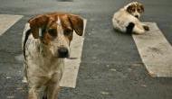 रिसर्च में खुलासा- अब कुत्ते भी लगा सकते हैं बिना लक्षण वाले covid-19 मरीजों का पता, जानिए कैसे ?
