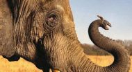 Mice have longer sperms than Elephants. Here's why