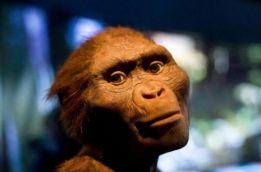 Hello Lucy! Know more about the 3.2-million-year-old female ancestor in today's Google Doodle
