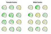'औरत का दिमाग़ और मर्द का दिमाग़ जैसी कोई  चीज़ नहीं'