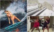 #LiteWire: dancing dad, surfer mom and Hedwig