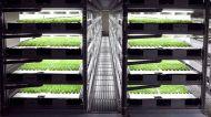 जापान में एक फार्म में बस रोबोट करेंगे किसानी