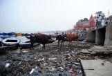 नमामि गंगे परियोजना: '50 साल में भी साफ नहीं हो पाएगी गंगा'