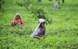 Death of workers mar the taste of Bengal tea. Is anybody listening?