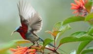 Birds may age faster due to traffic noise