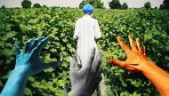पंजाब में चुनाव से पहले हर पार्टी को किसानों की चिंता सताने लगी है