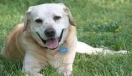 कुत्ते ने पिस्टल निकाल मालिक को मारी गोली, पुलिस हैरान