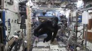 Apes in space: Watch astronauts Scott Kelly & Tim Peake's monkey around in the ISS