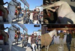 Didn't break leg of police horse, videos merged to malign me: BJP MLA Ganesh Joshi
