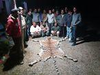 जिम कॉर्बेट में फैल रहा बेधड़क बाघों का शिकार