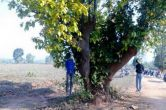 झारखंड के लातेहार में दो पशु कारोबारियों की हत्या