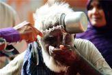 लू से तेलंगाना और आंध्र प्रदेश में 111 लोगों की मौत