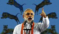 प्रधानमंत्री के बदले नजरिए से बदल सकती है देश में बाघों की किस्मत