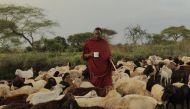 Why is this Maasai cattle herder from Tanzania in the news? Find out here