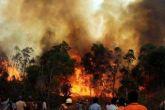 उत्तराखंड: अाग से 1900 हेक्टेयर जंगल तबाह