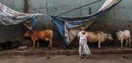 गुजरात: गोमांस रखने के अपराध में कोर्ट ने दी तीन साल की सजा