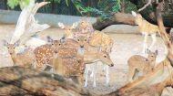 दिल्ली: चिड़ियाघर में 46 हिरणों की मौत की आशंका, कठघरे में प्रशासन