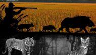 क्यों 300 जंगली सुअरों और नील गायों को मारने की नौबत आई?