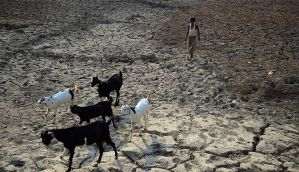 Sorry state of affairs: every farming household in India owes Rs 50,000