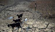 बेहाल खेतिहर: भारत के हर किसान परिवार पर है 50 हजार का कर्ज