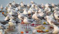 विश्व पर्यावरण दिवस: पारिस्थितिक तबाही को रोकना चाहते हैं? पक्षियों के संरक्षण से शुरुआत कीजिए