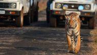 अंधाधुंध विकास और बाघ संरक्षण दोनों एक साथ शायद मुश्किल है