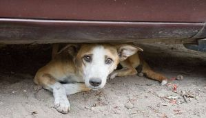 Chennai: Villagers poison and burn 50 dogs alive