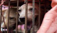 चीन: कुत्ते का सड़ा मांस बेचने पर 22 को हुई जेल