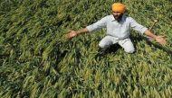 पंजाब में गहराने लगा है खेती पर संकट