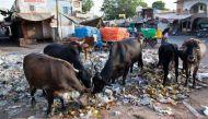 हरियाणा में गोरक्षा के लिए खट्टर सरकार ने शुरू की हेल्पलाइन
