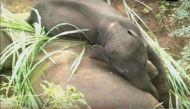 मां-बेटे का रिश्ता सिर्फ इंसानों में ही नहीं होता, हाथी के बच्चे का यह वीडियो आपकी आंखें नम कर देगा