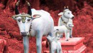 हिमाचल प्रदेश हाईकोर्टः छह माह में केंद्र सरकार बनाए गौहत्या रोकने का कानून