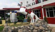Park opened in memory of beloved police horse Shaktiman in Dehradun