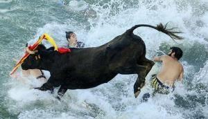 Bous a la Mar - A festival where bulls chase people into the sea
