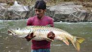 एक वक्त नर्मदा का गौरव रही महशीर मछली अब विलुप्त होने की कगार पर
