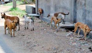 Kerala: SC orders vigilante groups to stop killing stray dogs