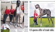 मिलिए दुनिया के सबसे बड़े कुत्ते की रेस में 8 फुट के 'मेजर' से