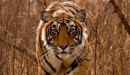 International Tiger Day: Ranthambore and its majestic cats