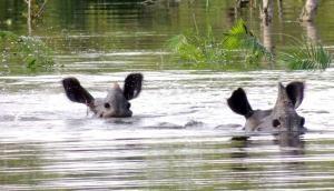 असम बाढ़ : राज्य के 26 जिले बुरी तरह प्रभावित, काजीरंगा नेशनल पार्क में 116 जानवरों की मौत