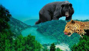 नैनीताल: जंगल-शहर का अंतर मिटाते ये जानवर बने चिंता का सबब
