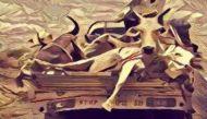 भूख से गायों की मौत: वसुंधरा के राज में गोशाला बनी मरणशाला